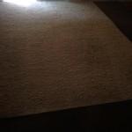 Pompano Beach-Fleas-Cleaning