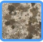 Water-Mold-Removal-Pompano Beach