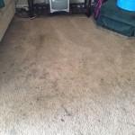 Pompano Beach-Dirty-Carpet