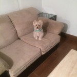 Pompano Beach-Sofa-Pet-Stain-Cleaning