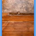 Wall-Mold-Removal-Pompano Beach