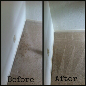 mold stain treatment
